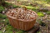 Mushrooms in big basket