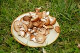 Mushrooms on the plate