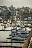 Coastal marina.