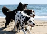 3 dogs running