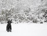 Dog in winter snow