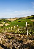 Italian vineyard: Monferrato