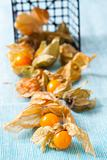 Physalis