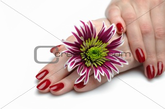 Beautiful hand with perfect nail red manicure. isolated