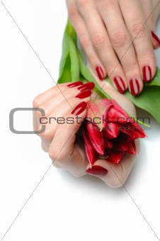 Beautiful hand with perfect nail red manicure and tulip