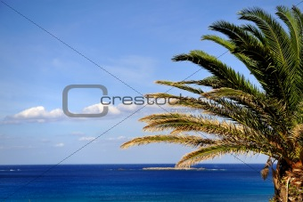 Beautiful palm tree over blue summer sky and sea