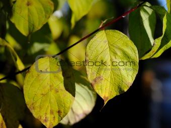 Green leaf floral background over black background outdoors