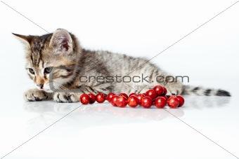 sleepy kitten with red beads
