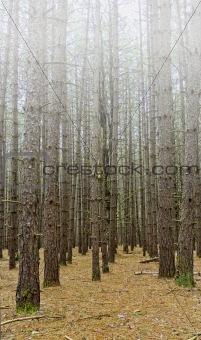 Kingdom State Forest