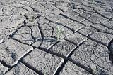 plant growing  in the cracked soil