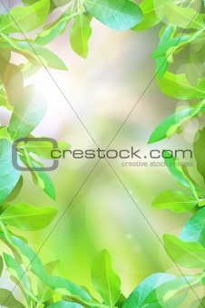 abstract beautiful green leaf and light reflect in morning