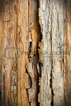 abstract texture of wood