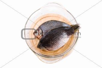 Crucian carp fish