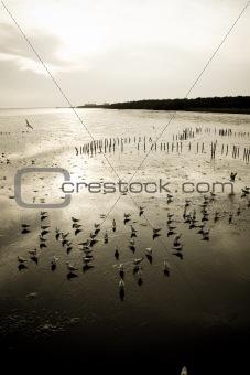 Float Sea gull
