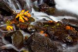 Autumn Waterfall, nature stock photography