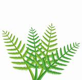 vector design of green fern leaves