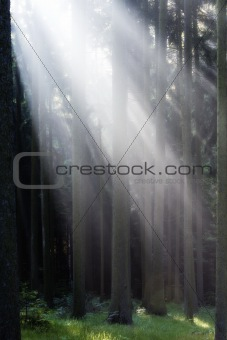 forest scene with sunrays shining through branches