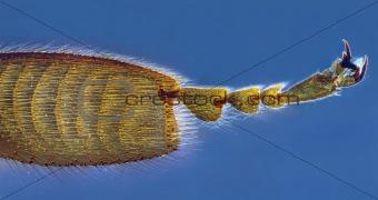 Bee leg