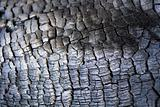 Closeup of a burned tree trunk surface