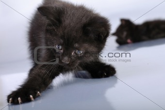 black kittens playing