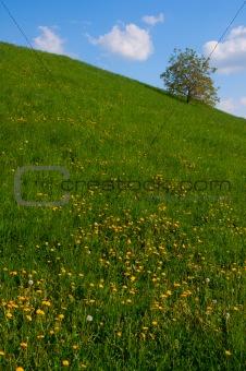 Single Tree on Meadow