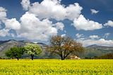 Italian landscape in spring