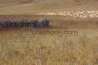 Group of sheep in grassland