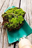 Green moss on a spade