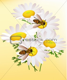 Bee and chamomile