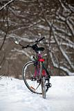 Bike standing in the woods
