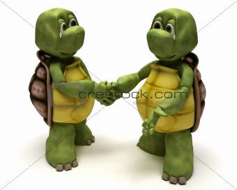 Tortoises shaking hands