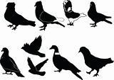 pigeons illustration collection