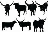 cattle illustration collection