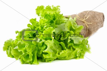 Green lettuce leaves.