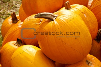 Autumn Fall Halloween Pumpkins