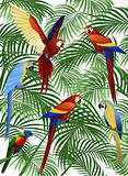 Parrot bird vector