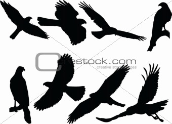 goshawk silhouette collection