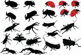 insects collection
