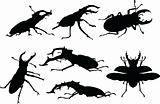 stag beetle collection