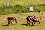 Group of horses ruuning arround a fence in a grass field