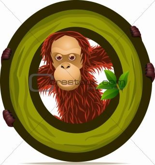 animal alphabet O with Orangutan cartoon