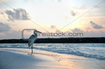 a heron on the beach