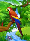 Parrot bird in the nature