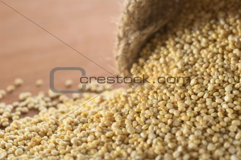 Raw White Quinoa Grains