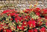 red flowers and brown stone wall