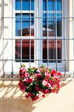 Flowers at the Window, Tuscany