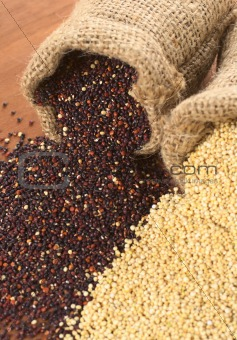 Raw Quinoa Grains in Jute Sack
