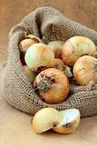 Organic fresh onion in linen bag