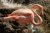 Resting Flamingo