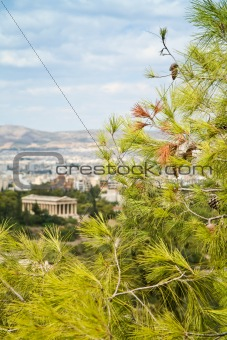 branch of pine with Athens on background